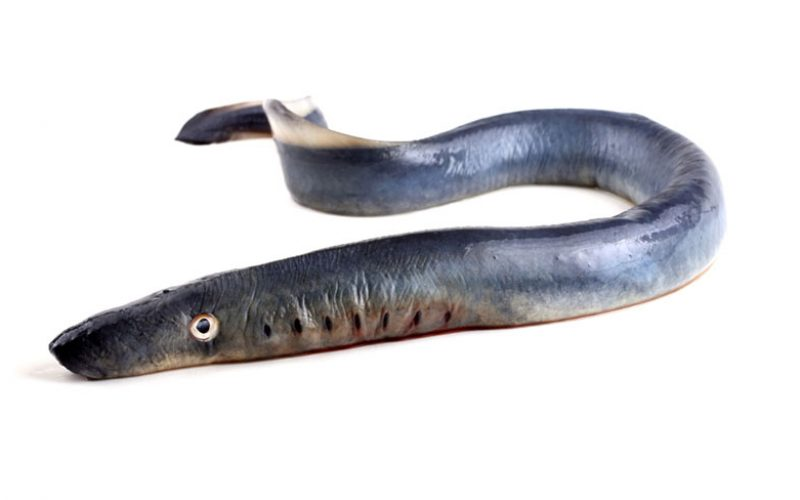 Genes that aid spinal cord healing in lamprey also present in humans