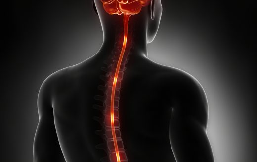 Spinal cord is 'smarter' than previously thought