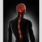 How nerve fibres enter spinal cord during early development