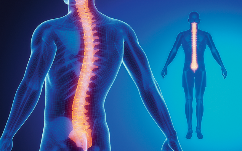 Researchers explore spinal discs' early response to injury and ways to improve it