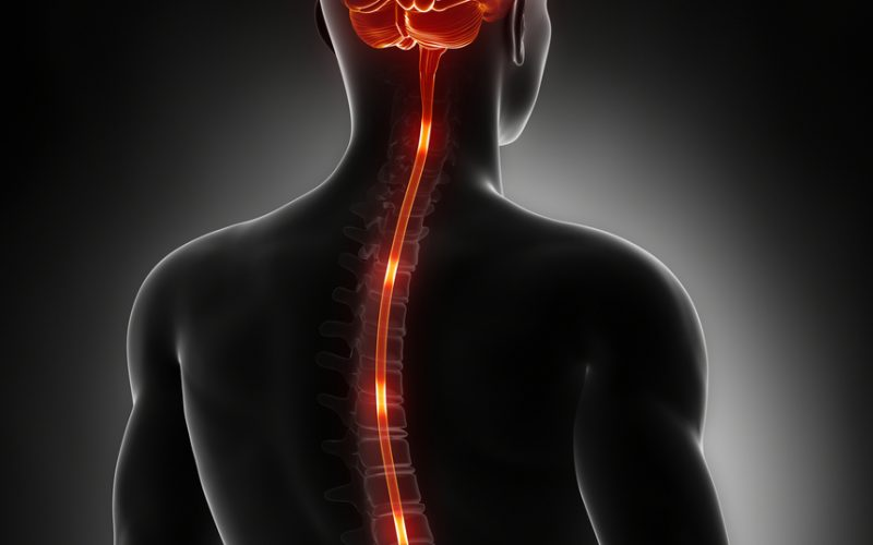 Neuronal feedback from sites below the spinal injury plays essential role during early recovery