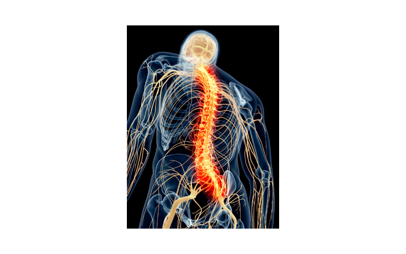 Scientists repair injured spinal cord using patients' own stem cells